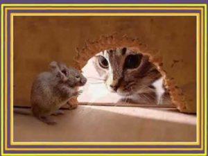 kot i mysz blockchain stabrawa tadeusz dascoin blockchain kryptowaluty
